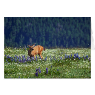 In the Meadow Card