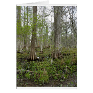 In the Swamp Card