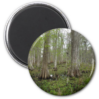 In the Swamp Magnet