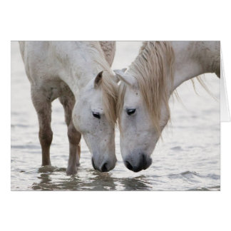In the Water at Dawn Horse Greeting Card