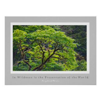 In Wildness is the Preservation of the World Poster