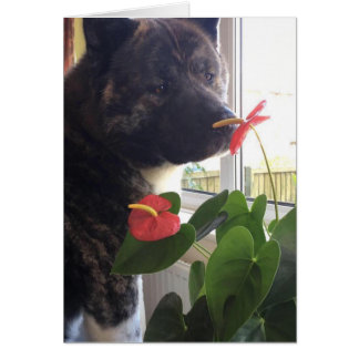 Inca and the Flower Card
