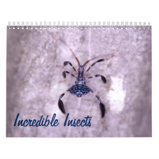 Incredible Insects Calendar