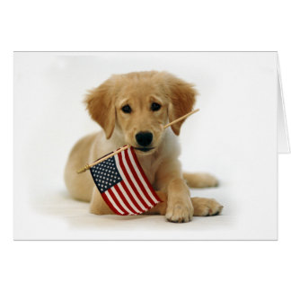 Independence Day Golden Retriever Puppy Card