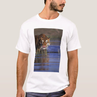 India. Bengal Tiger (Pathera tigris), captive T-Shirt