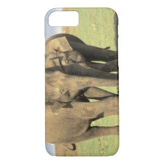 India, Nagarhole National Park. Asian elephant iPhone 7 Case