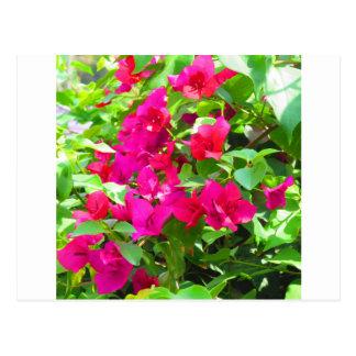 India travel flower bougainvillea floral emblem postcard