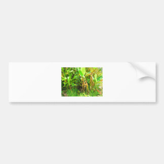 India Travels Infant Banana trees saplings Green Bumper Sticker