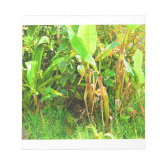 India Travels Infant Banana trees saplings Green Notepads
