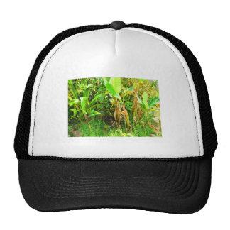India Travels Infant Banana trees saplings Green Trucker Hat