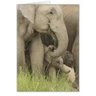 Indian / Asian Elephant and young one,Corbett 3