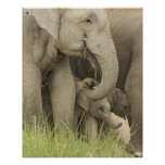 Indian / Asian Elephant and young one,Corbett 3 Poster