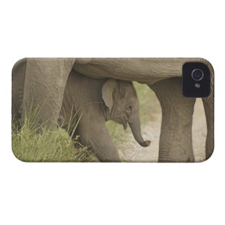Indian / Asian Elephant and young one,Corbett Case-Mate iPhone 4 Cases