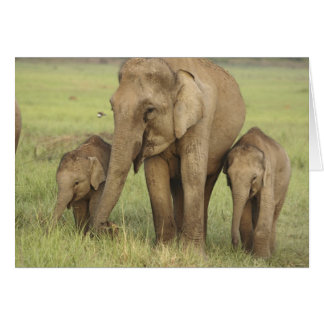 Indian / Asian Elephant and young ones,Corbett Card