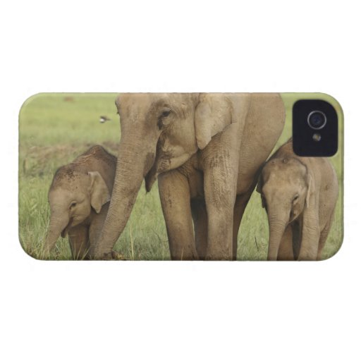 Indian / Asian Elephant and young ones,Corbett Blackberry Cases