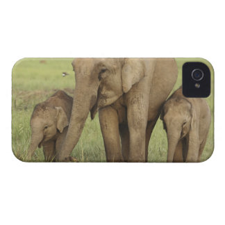 Indian / Asian Elephant and young ones,Corbett Case-Mate iPhone 4 Cases
