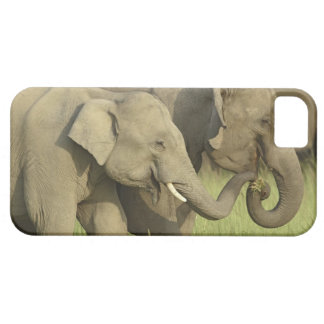 Indian / Asian Elephant asking for food;Corbett iPhone 5 Covers