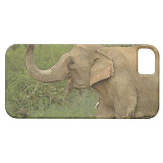 Indian / Asian Elephant communicating,Corbett 2 iPhone 5 Cases
