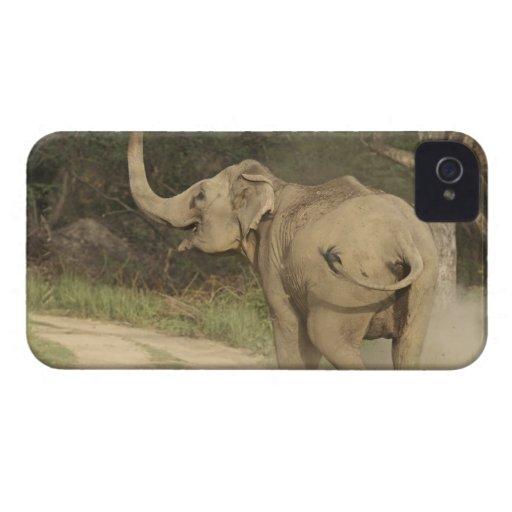 Indian / Asian Elephant communicating,Corbett Blackberry Bold Covers
