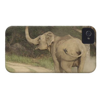 Indian / Asian Elephant communicating,Corbett iPhone 4 Case