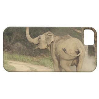 Indian / Asian Elephant communicating,Corbett iPhone 5 Cover