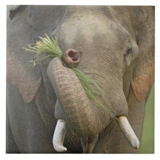 Indian / Asian Elephant displaying food,Corbett 2 Ceramic Tile