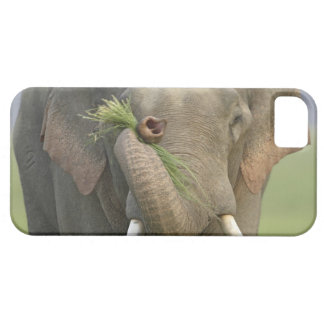 Indian / Asian Elephant displaying food,Corbett 2 iPhone 5 Cover