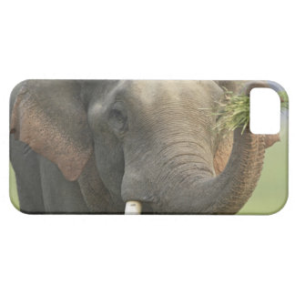 Indian / Asian Elephant displaying food,Corbett iPhone 5 Cover