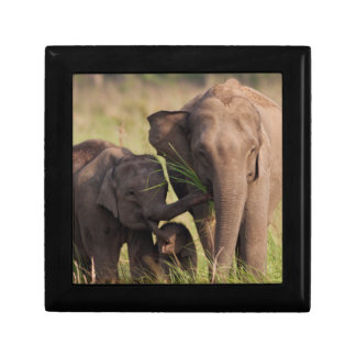 Indian Asian Elephant family in the savannah Gift Box