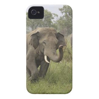Indian / Asian Elephant greeting,Corbett iPhone 4 Case
