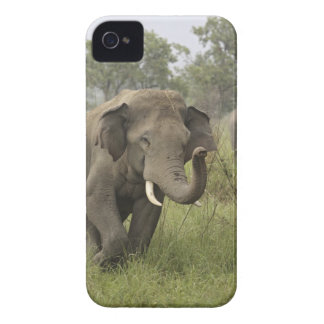 Indian / Asian Elephant greeting,Corbett iPhone 4 Cases