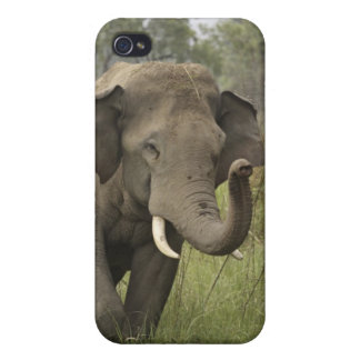 Indian / Asian Elephant greeting,Corbett iPhone 4/4S Cover