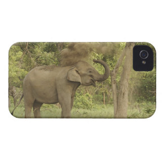 Indian / Asian Elephant taking dust bath,Corbett iPhone 4 Cases
