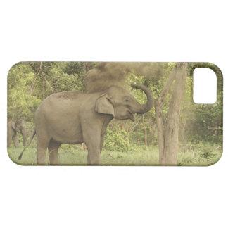 Indian / Asian Elephant taking dust bath,Corbett iPhone 5 Cover