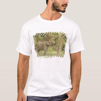 Indian / Asian Elephant taking dust bath,Corbett T-Shirt