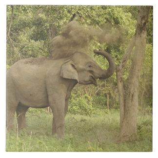 Indian / Asian Elephant taking dust bath,Corbett Tiles