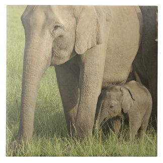 Indian / Asian Elephants and young one,Corbett Ceramic Tiles