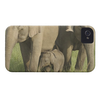 Indian / Asian Elephants and young one,Corbett iPhone 4 Covers