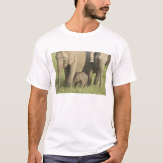 Indian / Asian Elephants and young one,Corbett T-Shirt