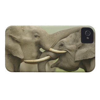 Indian / Asian Elephants play fighting,Corbett 2 iPhone 4 Case