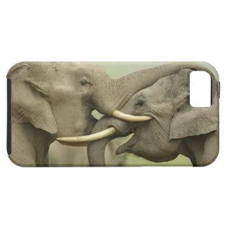 Indian / Asian Elephants play fighting,Corbett 2 iPhone 5 Cases