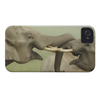 Indian / Asian Elephants play fighting,Corbett Case-Mate iPhone 4 Case