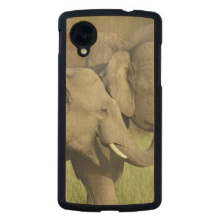 Indian / Asian Elephants sharing a Carved® Maple Nexus 5 Slim Case