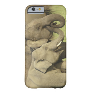 Indian / Asian Elephants sharing a Barely There iPhone 6 Case