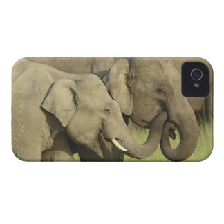 Indian / Asian Elephants sharing a Case-Mate iPhone 4 Case