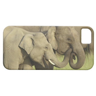 Indian / Asian Elephants sharing a iPhone 5 Cases