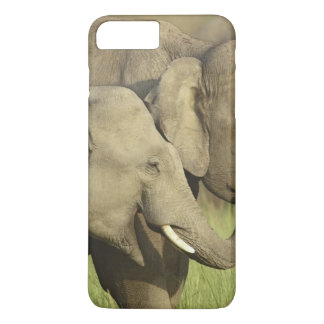 Indian / Asian Elephants sharing a iPhone 7 Plus Case
