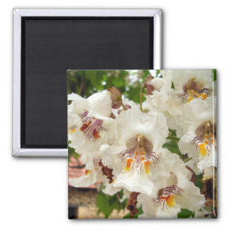 Indian Bean Tree Flowers Magnet