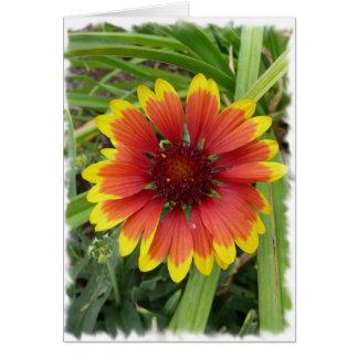 Indian Blanket Flower Card