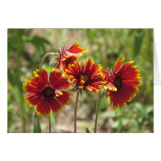 Indian Blanket Wildflowers Card